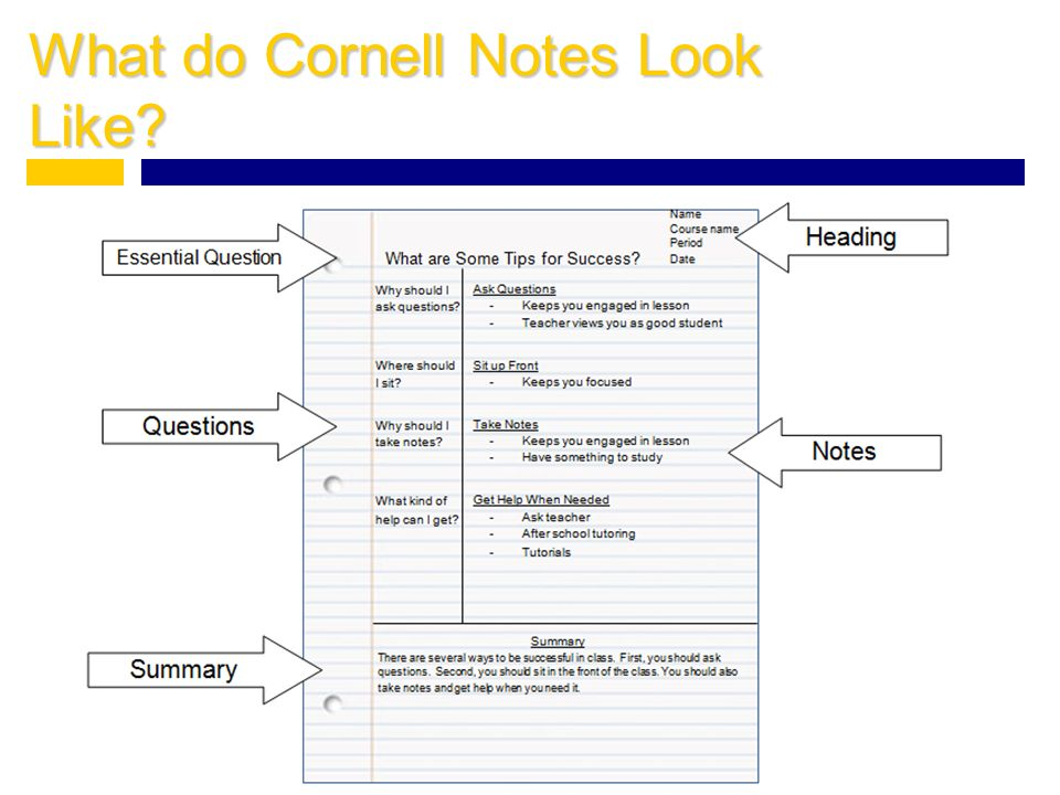 What do Cornell Notes Look Like