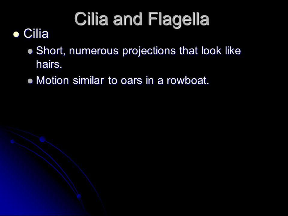 Cilia and Flagella Cilia