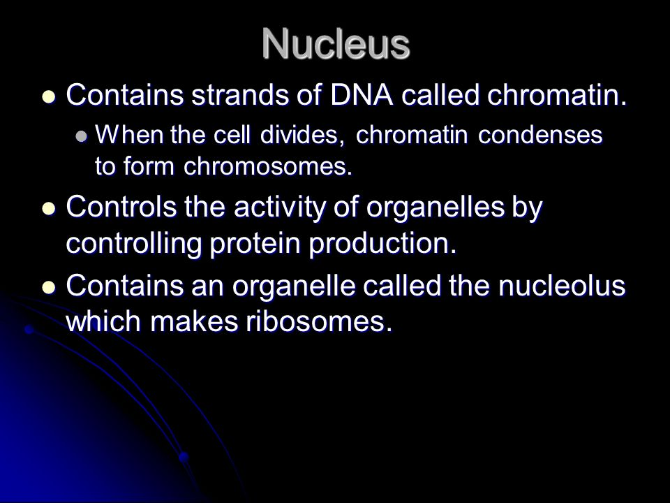 Nucleus Contains strands of DNA called chromatin.
