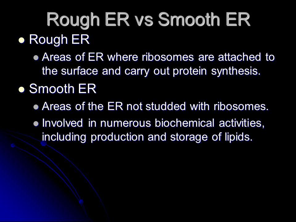 Rough ER vs Smooth ER Rough ER Smooth ER