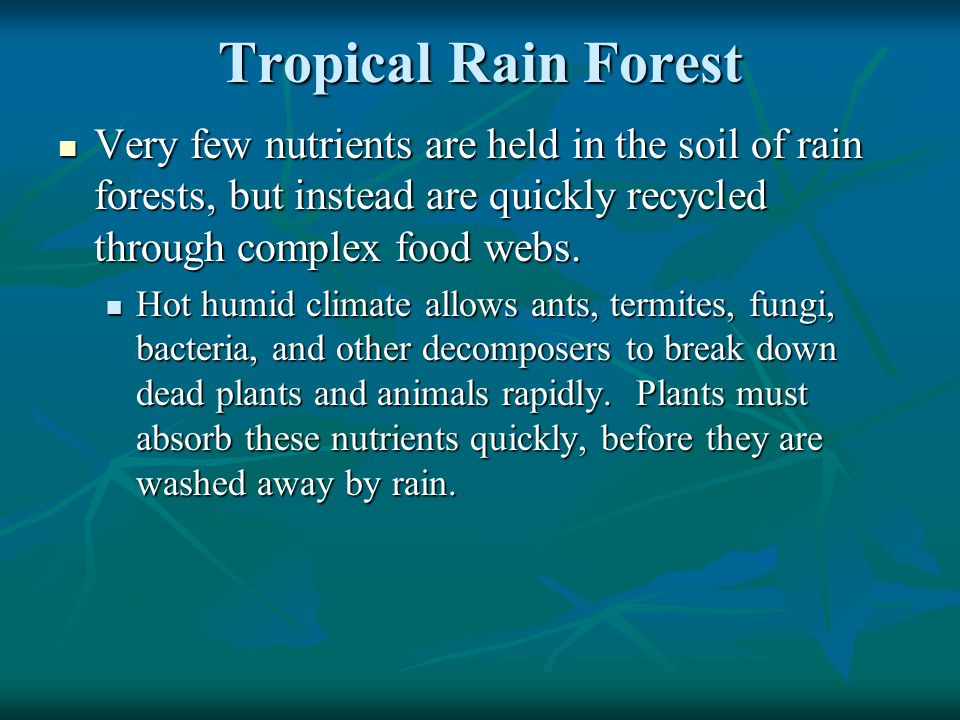 Tropical Rain Forest Very few nutrients are held in the soil of rain forests, but instead are quickly recycled through complex food webs.