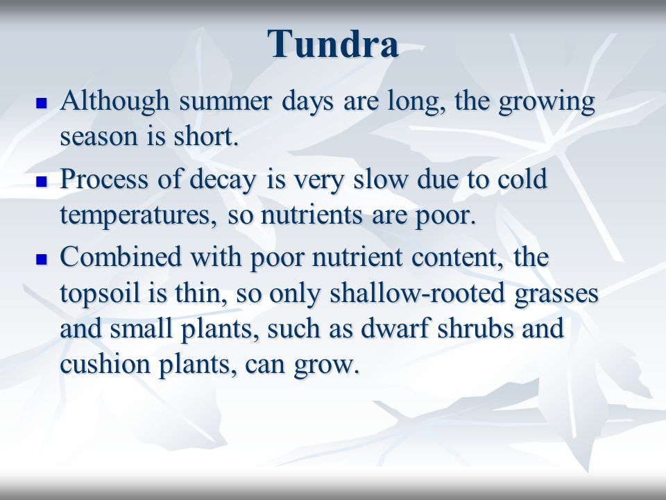 Tundra Although summer days are long, the growing season is short.