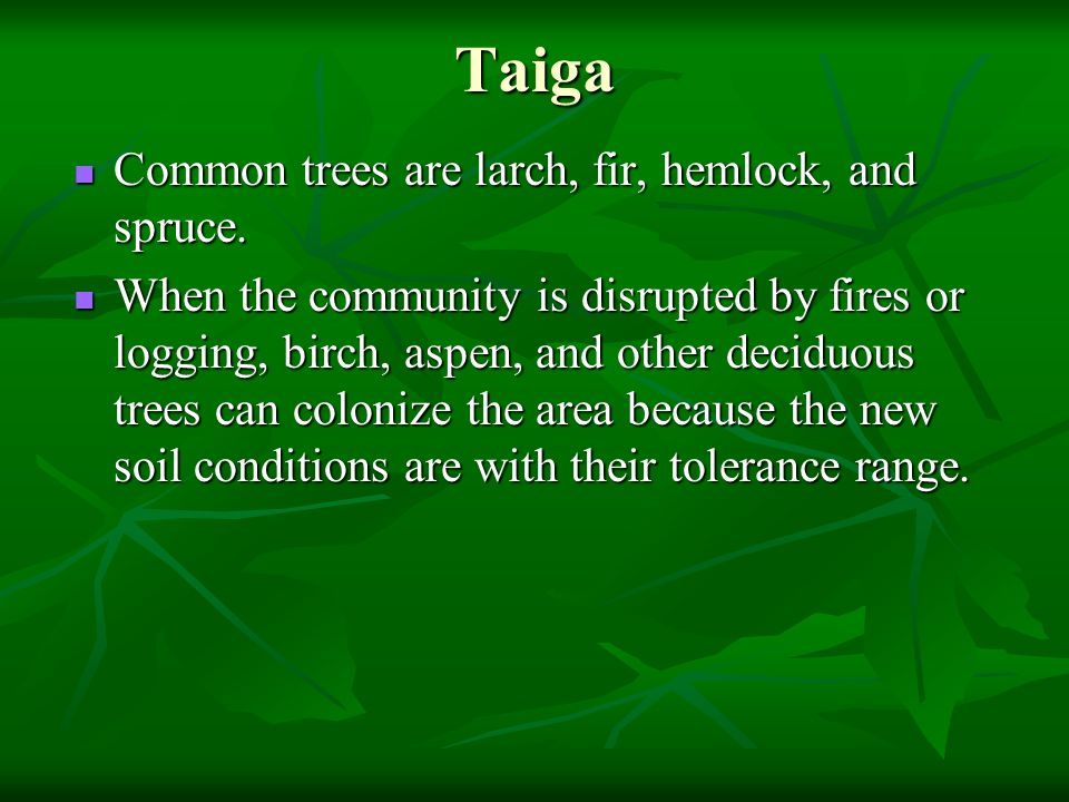 Taiga Common trees are larch, fir, hemlock, and spruce.