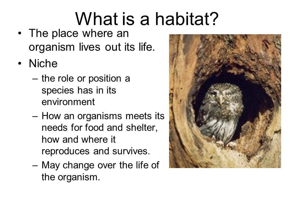 What is a habitat The place where an organism lives out its life.