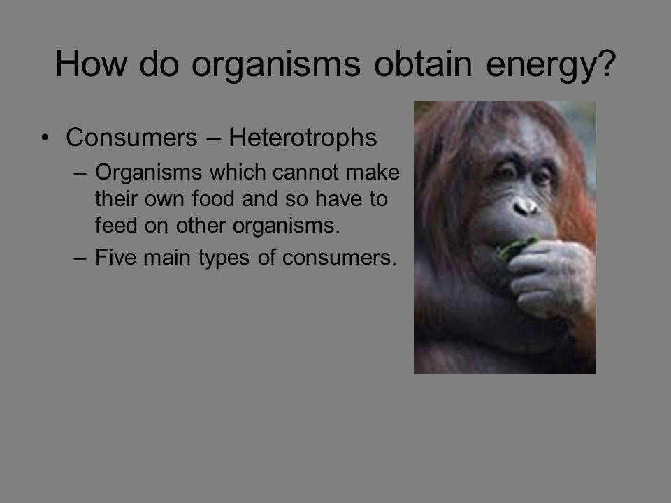 How do organisms obtain energy