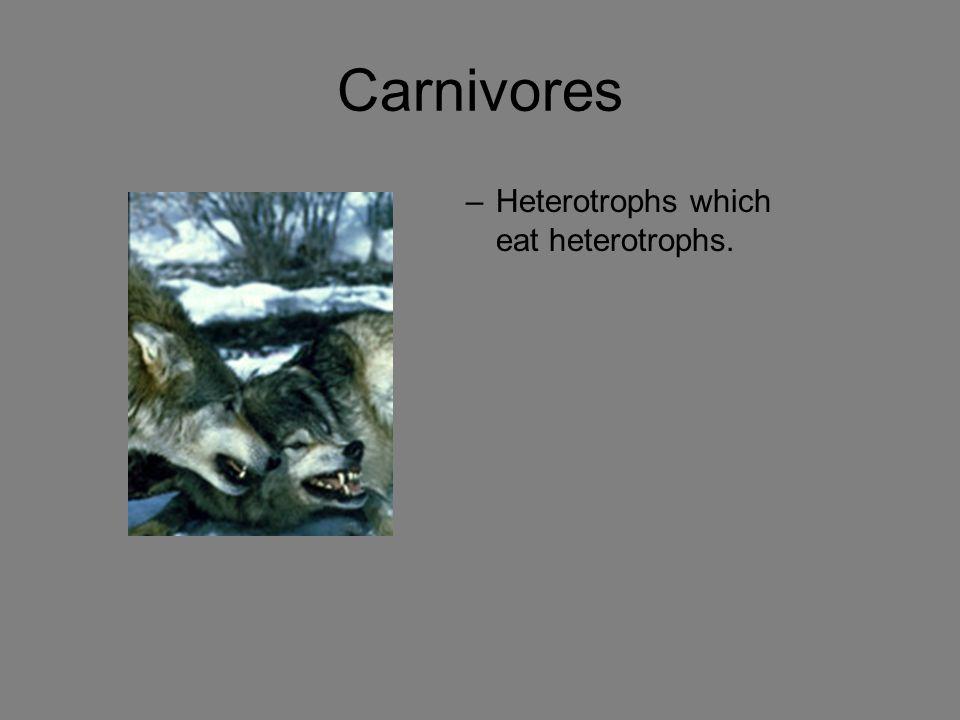 Carnivores Heterotrophs which eat heterotrophs.