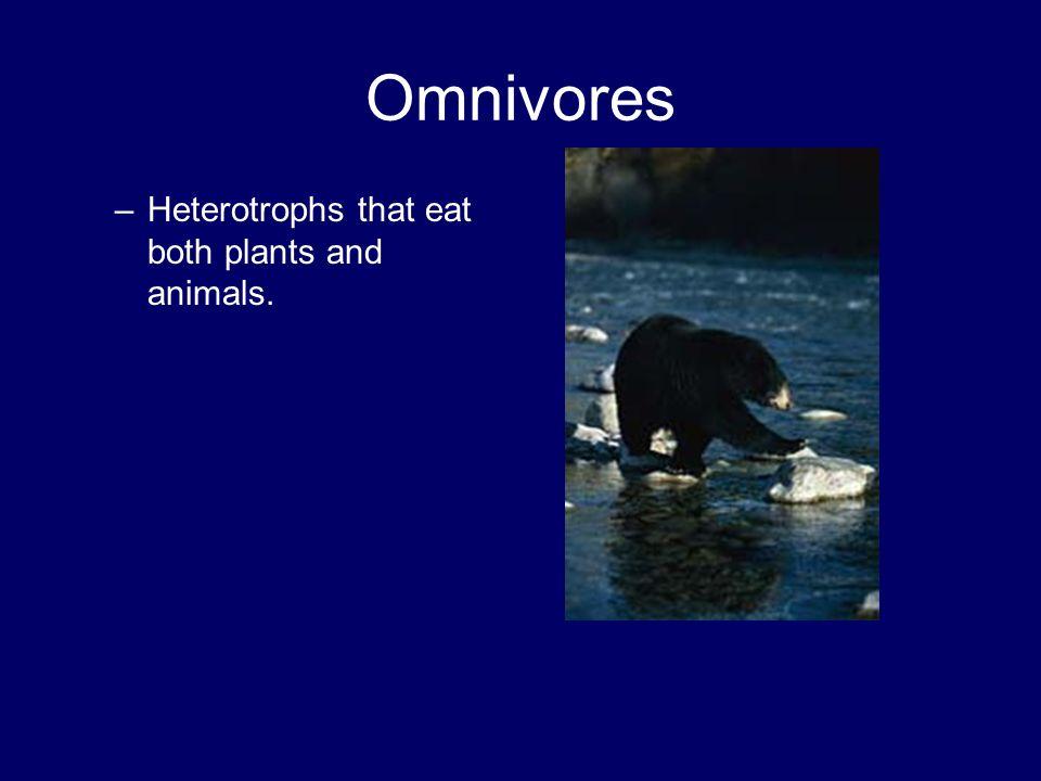 Omnivores Heterotrophs that eat both plants and animals.