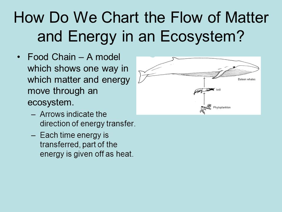 How Do We Chart the Flow of Matter and Energy in an Ecosystem