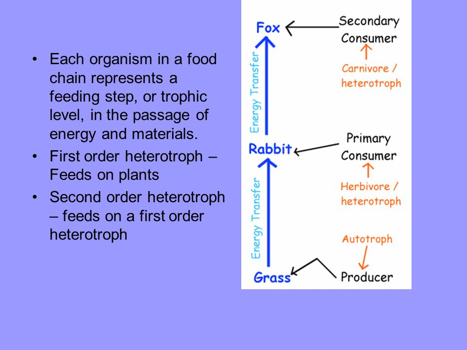 Each organism in a food chain represents a feeding step, or trophic level, in the passage of energy and materials.