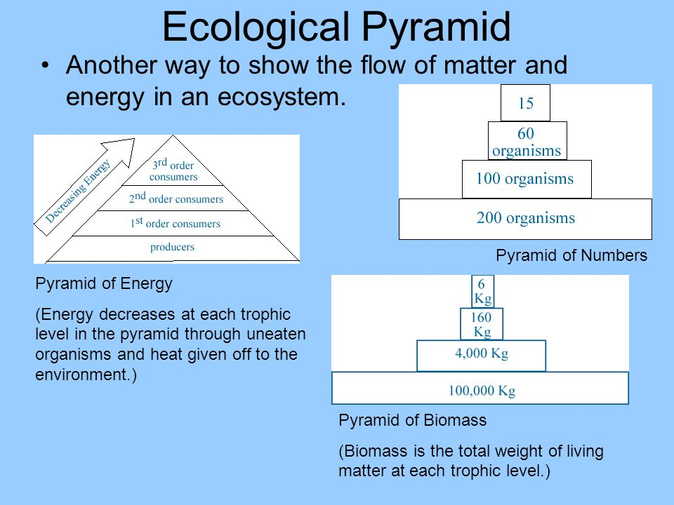 Ecological Pyramid Another way to show the flow of matter and energy in an ecosystem. Pyramid of Numbers.