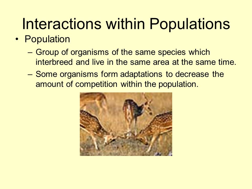 Interactions within Populations