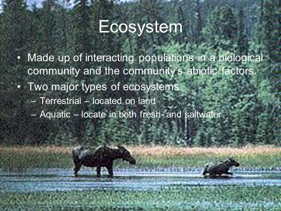 Ecosystem Made up of interacting populations in a biological community and the community's abiotic factors.
