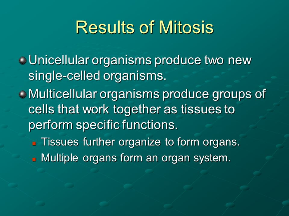 Results of Mitosis Unicellular organisms produce two new single-celled organisms.