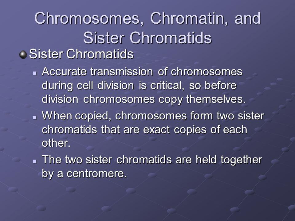 Chromosomes, Chromatin, and Sister Chromatids