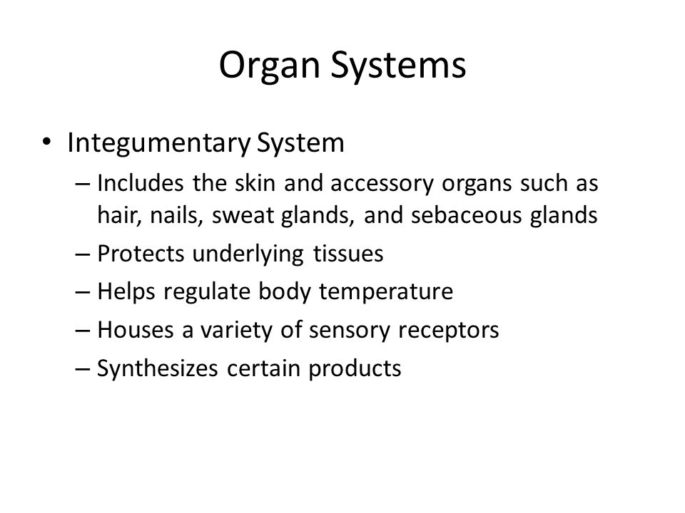 Organ Systems Integumentary System