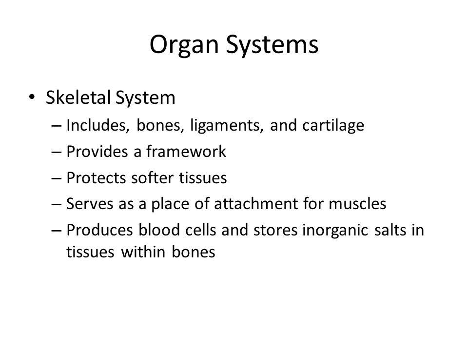 Organ Systems Skeletal System