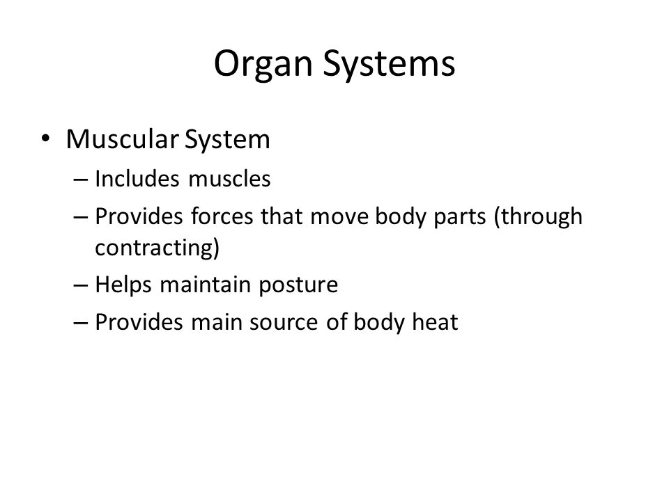 Organ Systems Muscular System Includes muscles