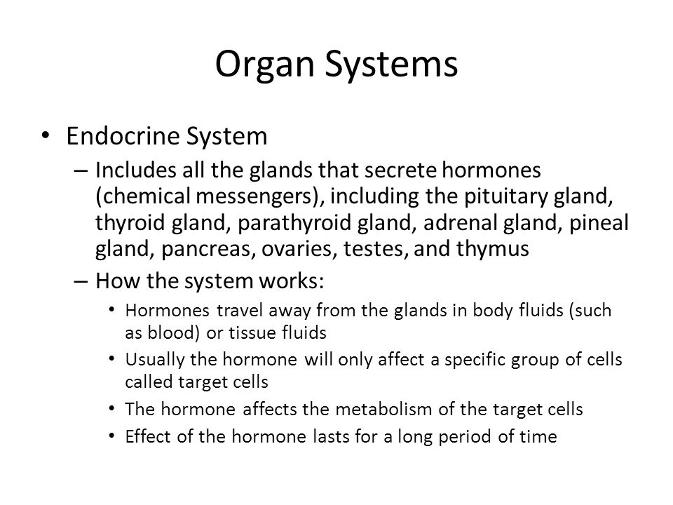Organ Systems Endocrine System