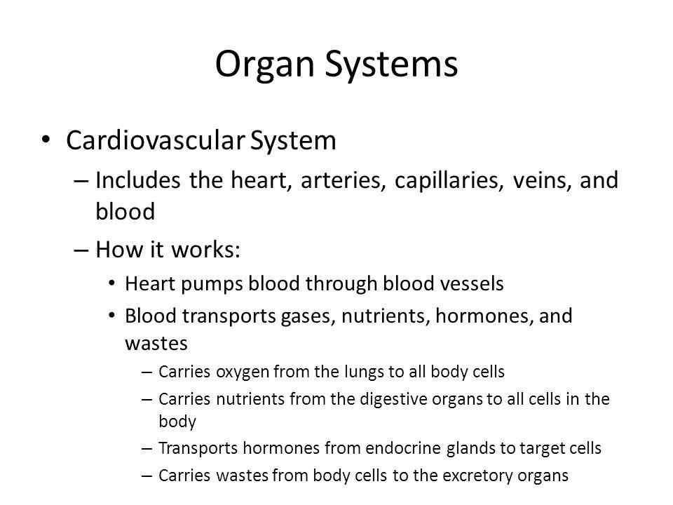 Organ Systems Cardiovascular System