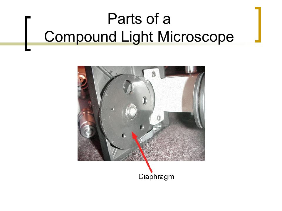 Parts of a Compound Light Microscope