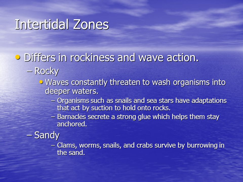 Intertidal Zones Differs in rockiness and wave action. Rocky Sandy
