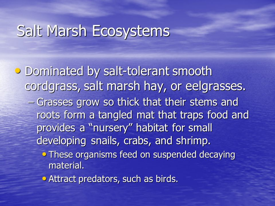 Salt Marsh Ecosystems Dominated by salt-tolerant smooth cordgrass, salt marsh hay, or eelgrasses.