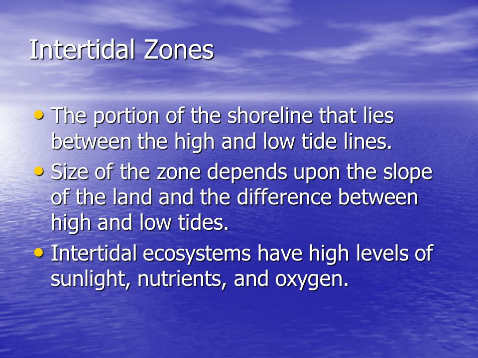 Intertidal Zones The portion of the shoreline that lies between the high and low tide lines.