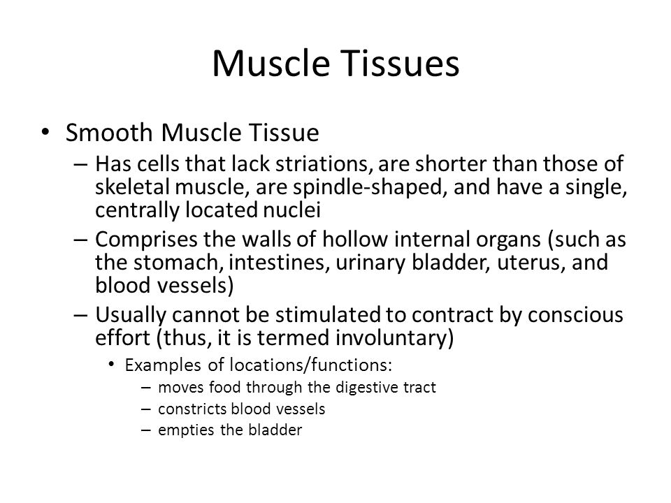 Muscle Tissues Smooth Muscle Tissue