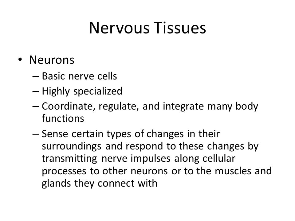 Nervous Tissues Neurons Basic nerve cells Highly specialized