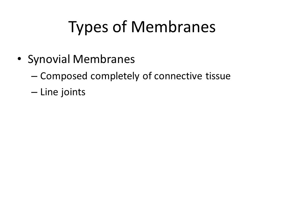 Types of Membranes Synovial Membranes