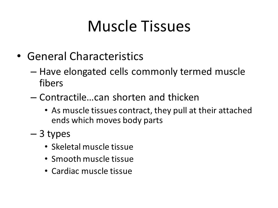 Muscle Tissues General Characteristics