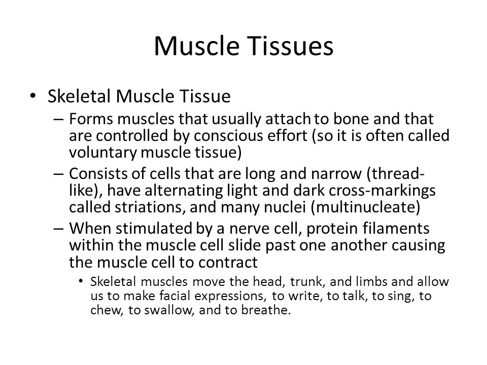 Muscle Tissues Skeletal Muscle Tissue