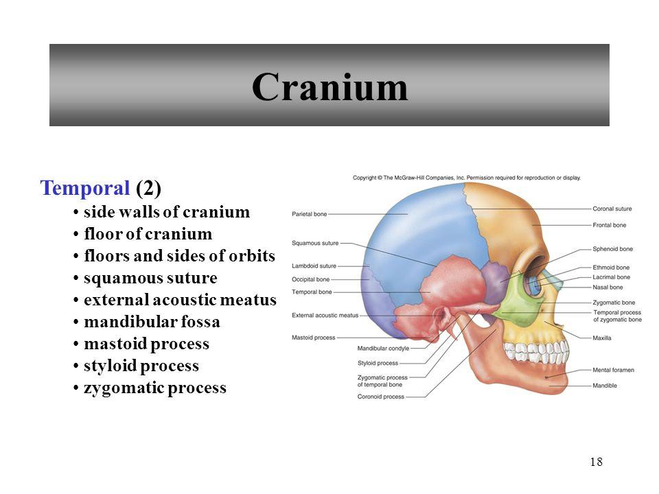Cranium Temporal (2) side walls of cranium floor of cranium