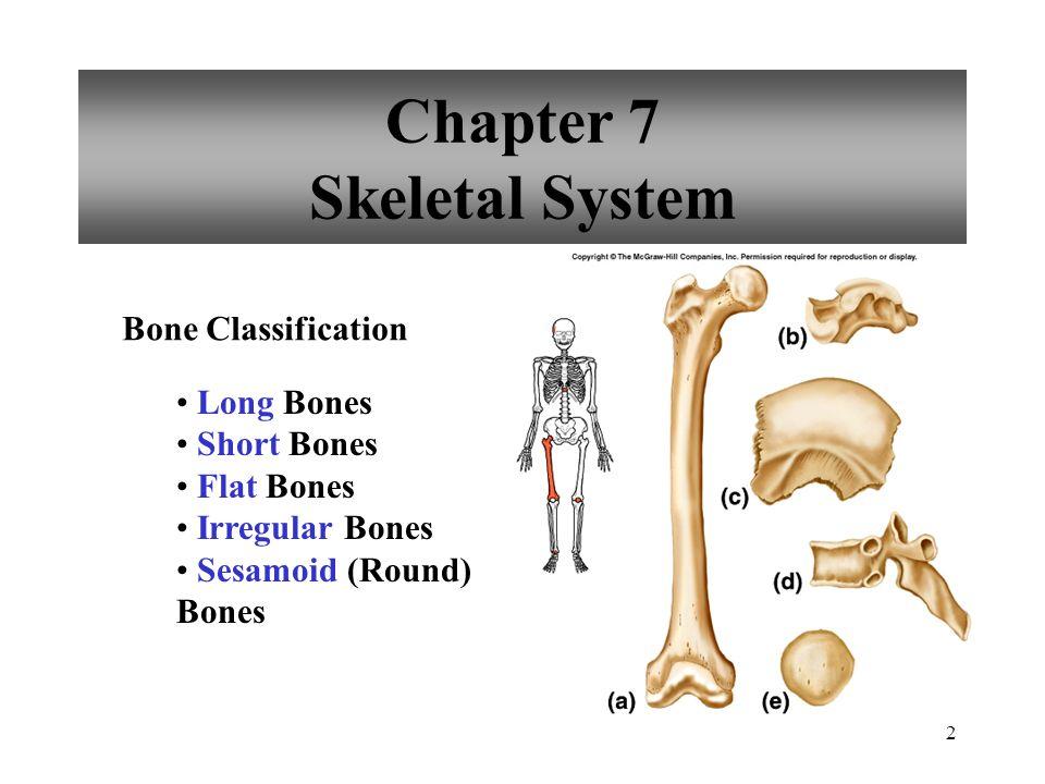 Chapter 7 Skeletal System