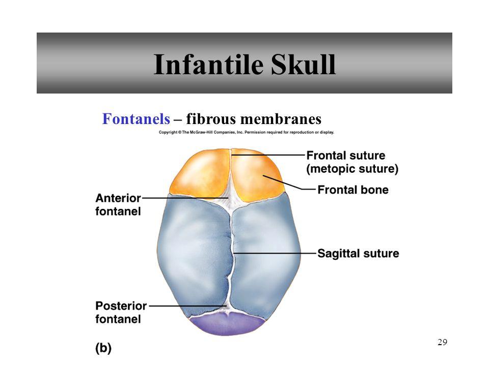 Infantile Skull Fontanels – fibrous membranes