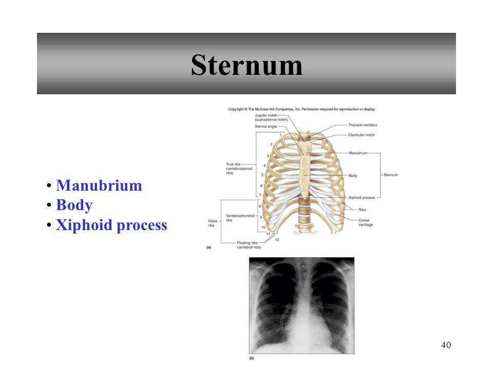 Sternum Manubrium Body Xiphoid process