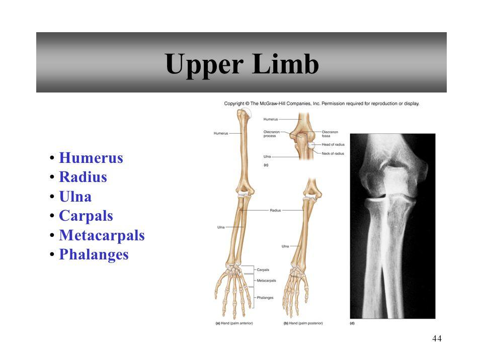 Upper Limb Humerus Radius Ulna Carpals Metacarpals Phalanges