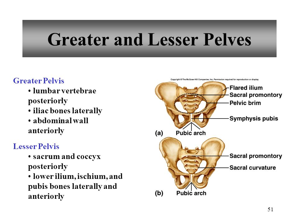 Greater and Lesser Pelves