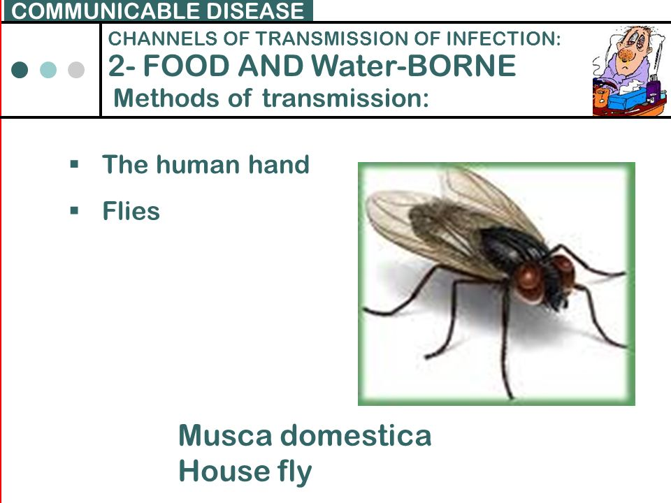 2- FOOD AND Water-BORNE Musca domestica House fly
