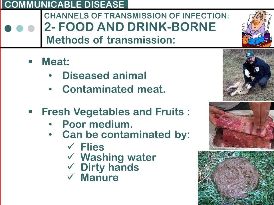 2- FOOD AND DRINK-BORNE Methods of transmission: Meat: Diseased animal
