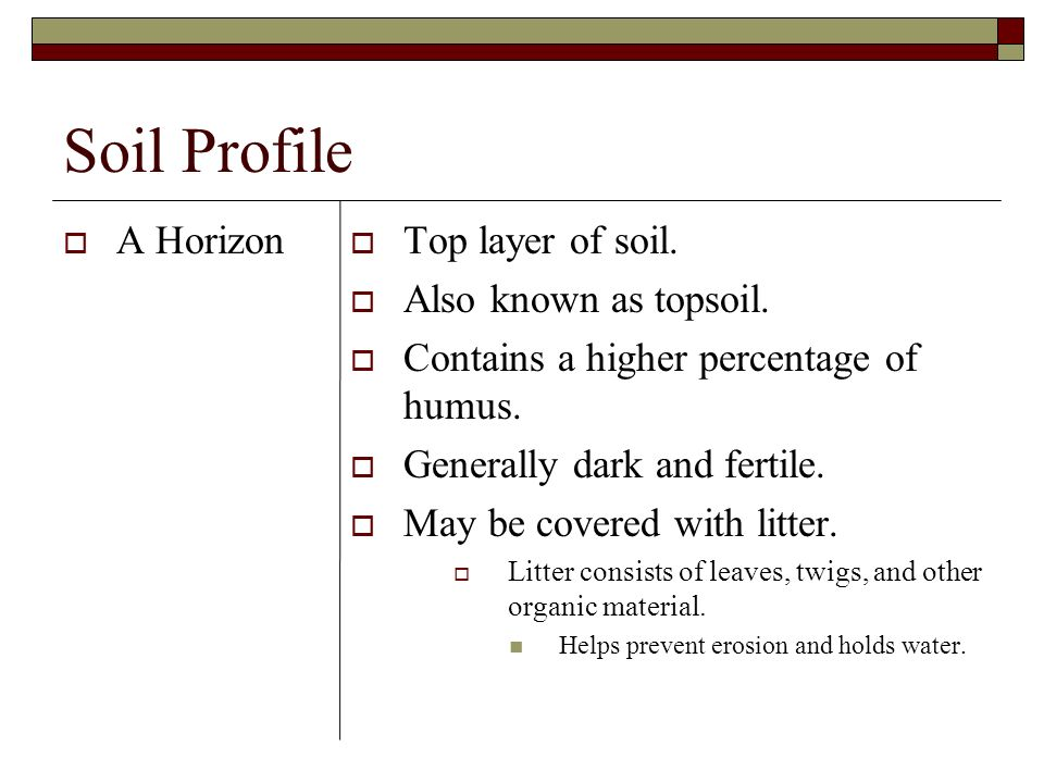 Soil Profile A Horizon Top layer of soil. Also known as topsoil.