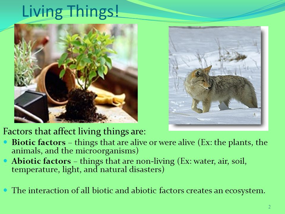 evolution and how it affects living things 5 facts about evolution and religion  (64%) of white evangelicals say that humans and other living things have always existed in their present form, while roughly .