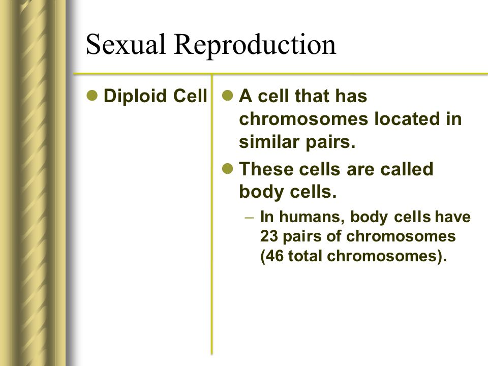 Sexual Reproduction Diploid Cell