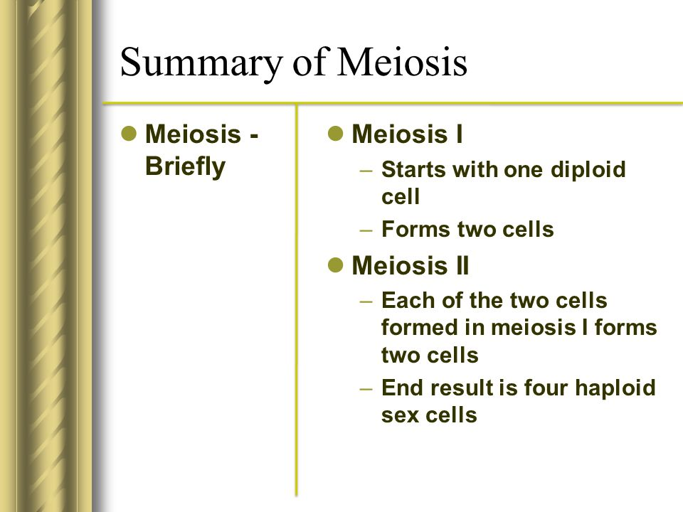 Summary of Meiosis Meiosis - Briefly Meiosis I Meiosis II