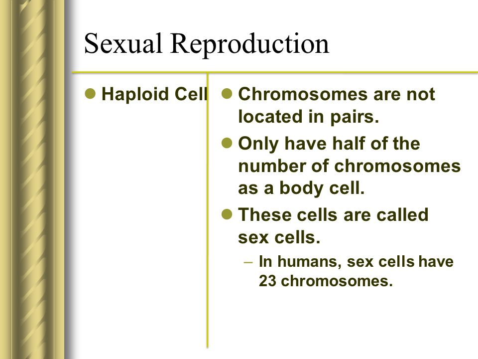 Sexual Reproduction Haploid Cell Chromosomes are not located in pairs.