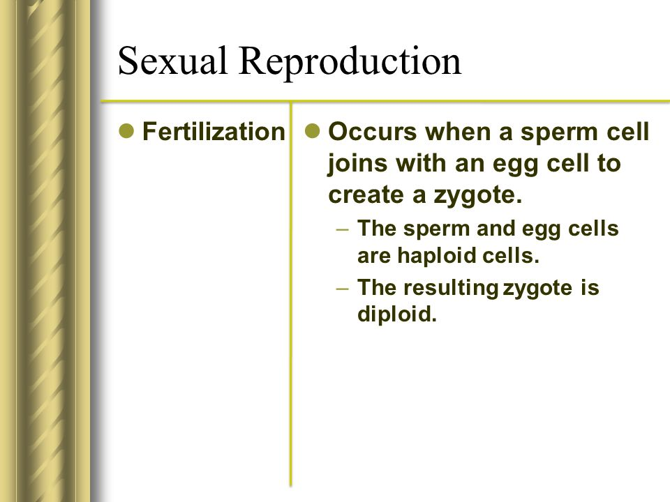 Sexual Reproduction Fertilization