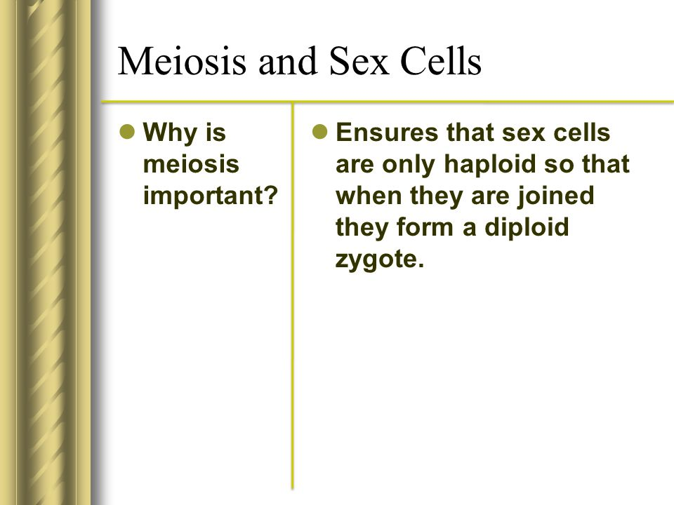 Meiosis and Sex Cells Why is meiosis important