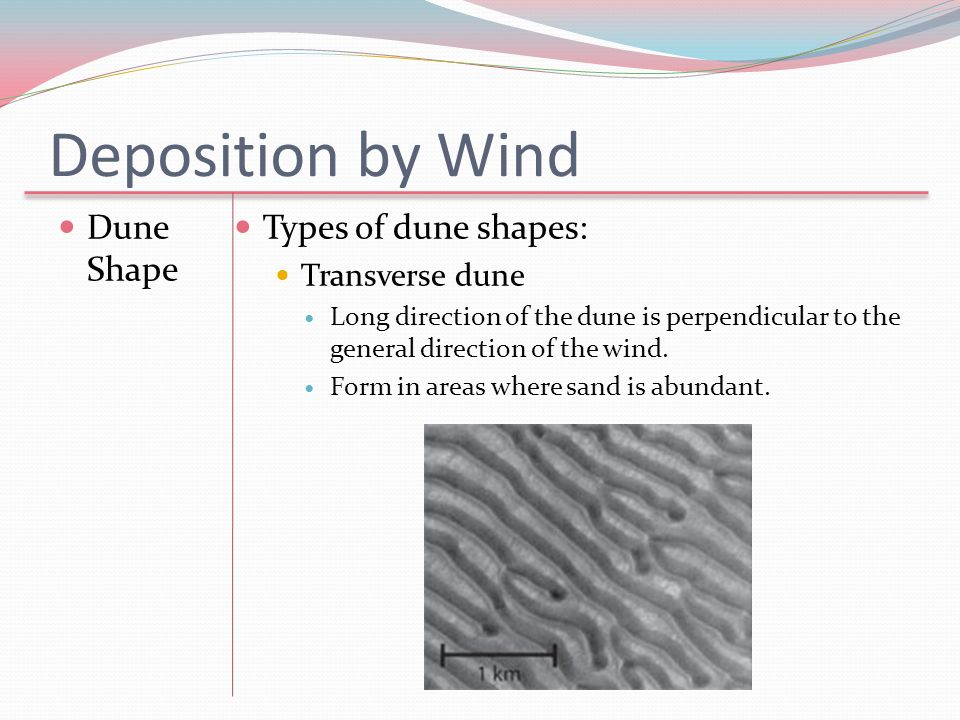 Deposition by Wind Dune Shape Types of dune shapes: Transverse dune