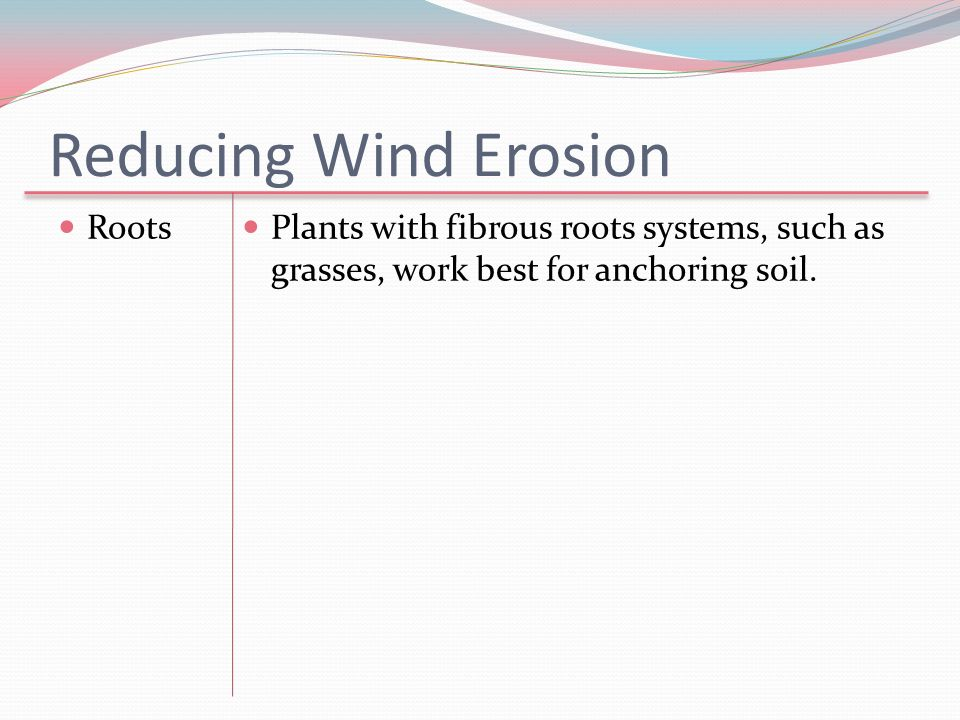 Reducing Wind Erosion Roots