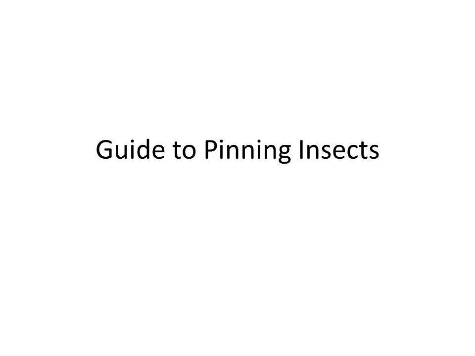 Guide to Pinning Insects